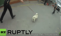 Pug Is Reunited With Owner After Being Stolen By Thieves