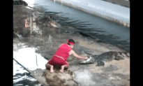 Accident At A Crocodile Show