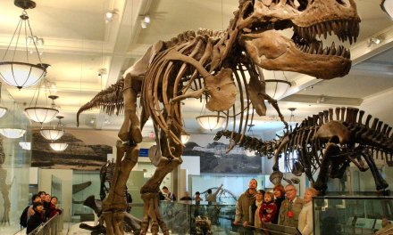 The American Museum of Natural History is New York City's #1 Attraction