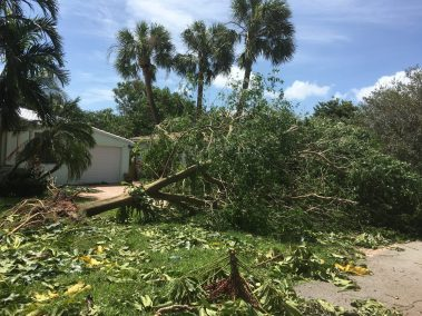 Tree Down in Fort Lauderdale