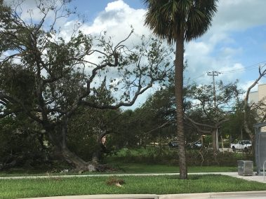 trees down from irma