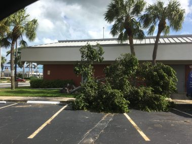 trees down everywhere from irma