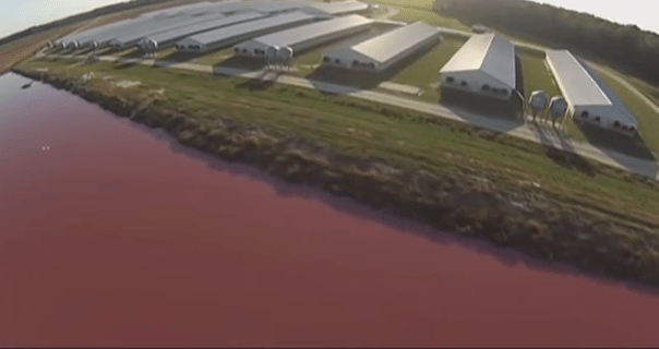 A Drone Flew Over A Pig Farm And Your Not Going To Believe What They Discovered