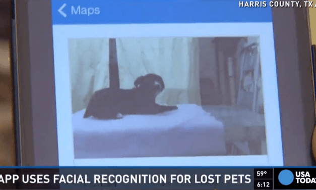 New App Will Make Sure You Never Lose Your Dog Again