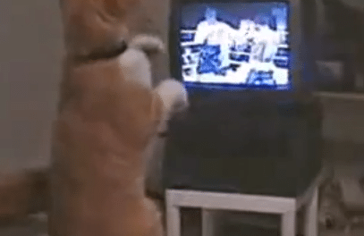 The Real Boxing Cat