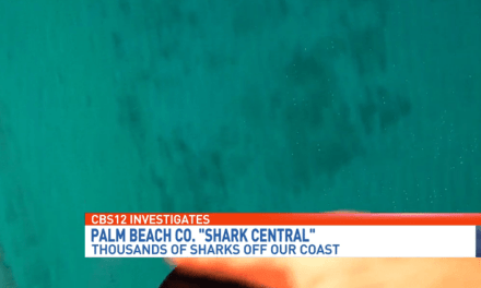 Blacktip Sharks Spotted off Palm Beach County Beaches