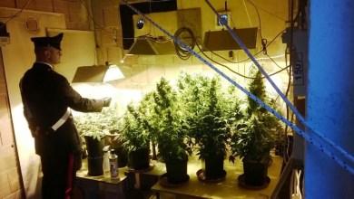 Photo of Sant'Antimo – Serra di cannabis in mansarda: arrestati padre e figlio