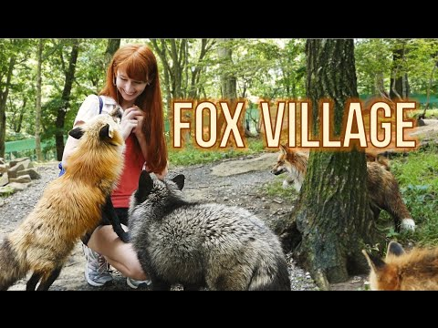 """Fox """"Zoo"""" Village in Zao Japan! 蔵王きつね村・kitsune mura"""