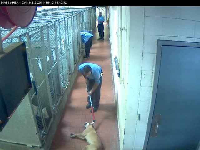 Mari abused at MAS – Main Area Canine 2