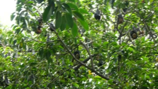 Rainforest Fruit Bats 1