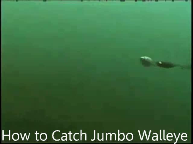 Jumbo Walleye