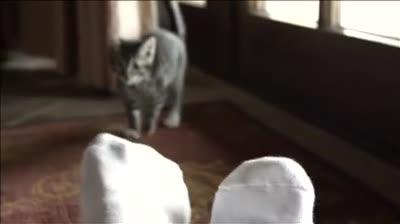 AHS Pet Adoption Magic