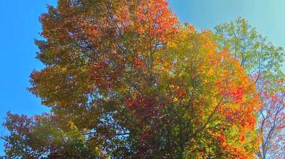 Fall Foliage Long Lake NY 2013
