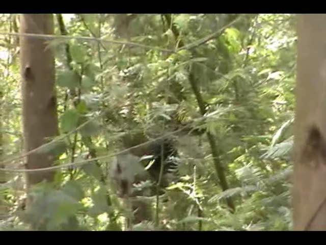 Primates at Brackenhurst