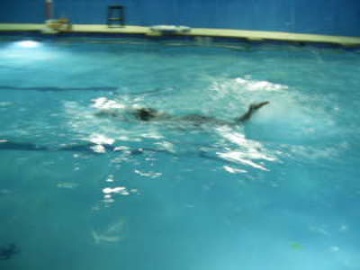 Swim Class Progress (NewYears Eve-Eve Dec. 30, 2014) 001
