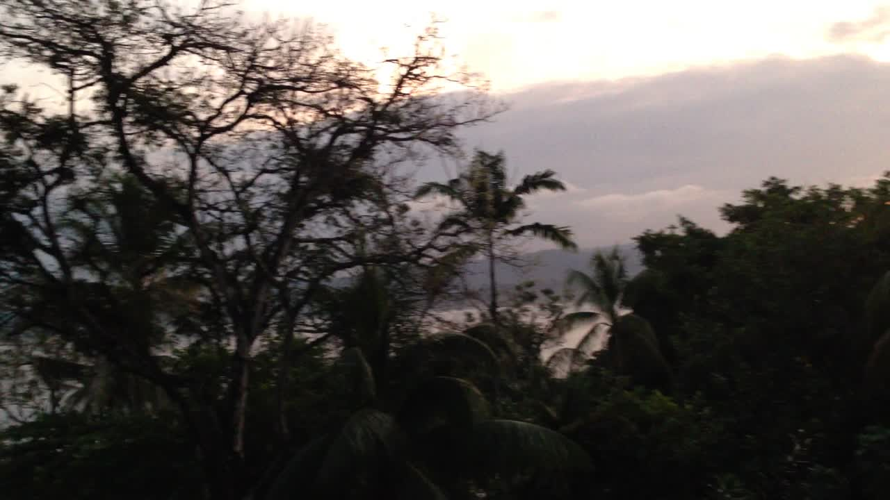 21 second video of birds at sunrise in Osa