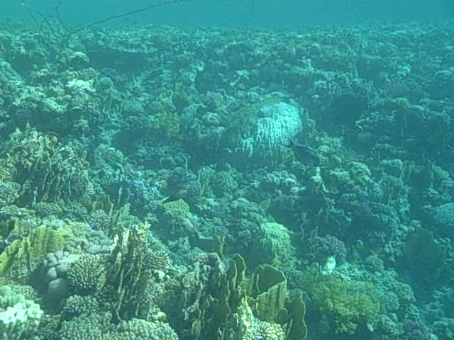 Above the reef