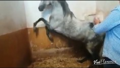 [ID: WwgL7T8CKhI] Youtube Automatic