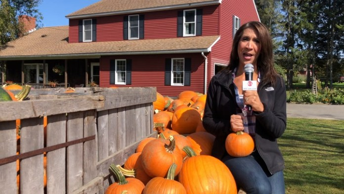 Pumpkins, apples and corn-oh my! So much to do at your local farm this season and it's safe and easy to enjoy. Did the drought hurt the apples and pumpkins this year? Watch to find out!