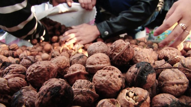 Kyrgyzstan: Walnuts Boost Farmers' Income