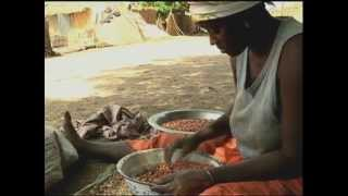 Senegal: Sowing The Seeds