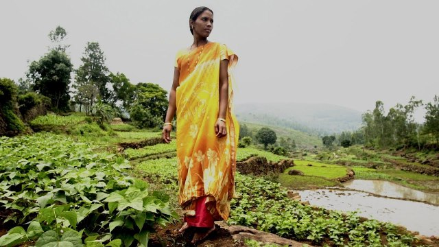 Zero Budget Natural Farming: An Agricultural Revolution is Taking Shape in India
