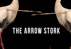 Featured Vid #184 – The Arrow Stork