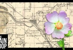 Featured Vid #411 – This Flower Only Grows In The Wild On A Single Tiny Island… In Illinois.
