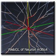 WebGLNeuron_m36c4_wtext