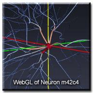 WebGLNeuron_m42c4_wtext