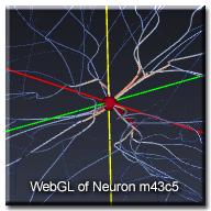 WebGLNeuron_m43c5_wtext