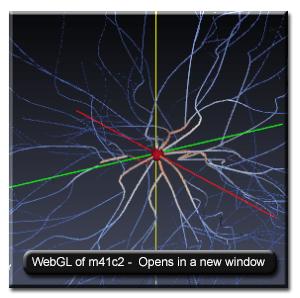Motor Neuron M41C2 link to WebGL