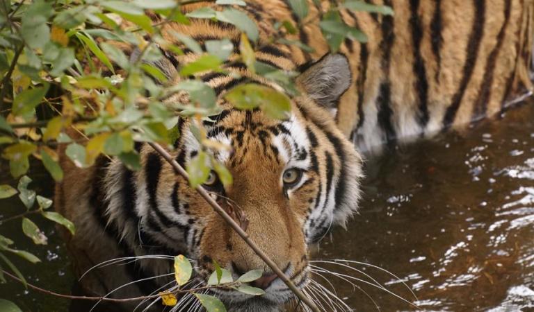 Can Wild Animals Really Sense Fear?