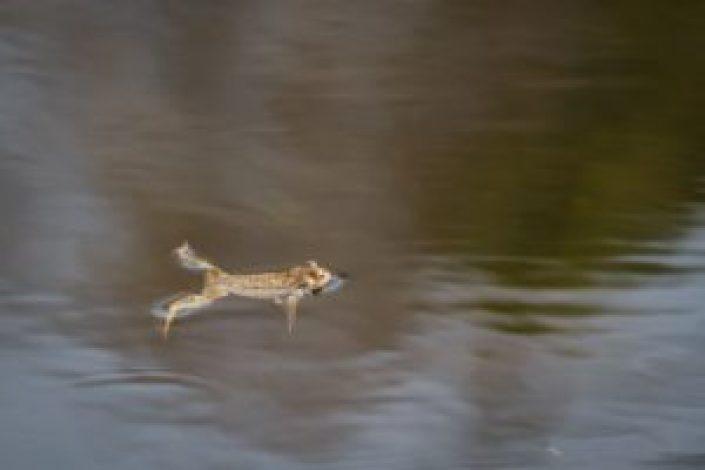 hãy tập bơi ếch để cao lên nhanh chóng