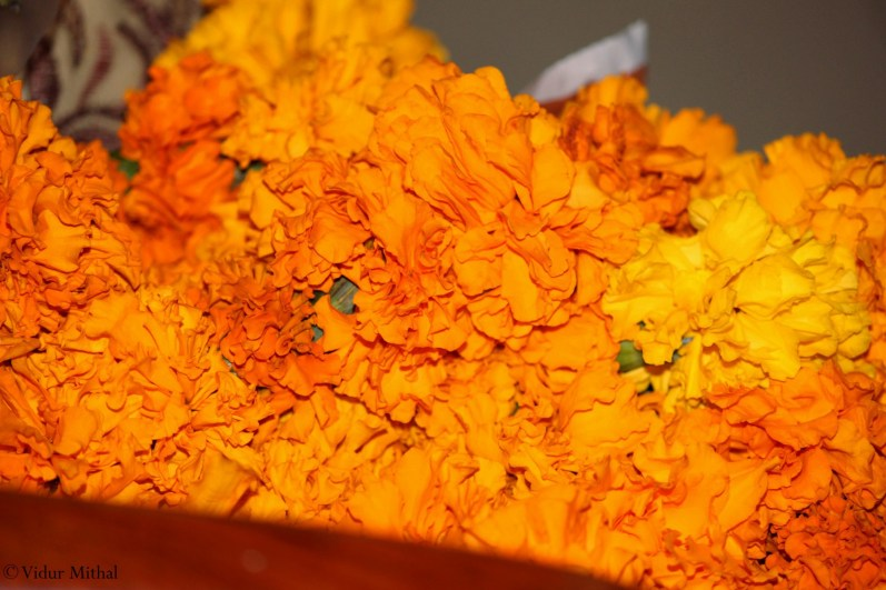 Photograph of Marigold