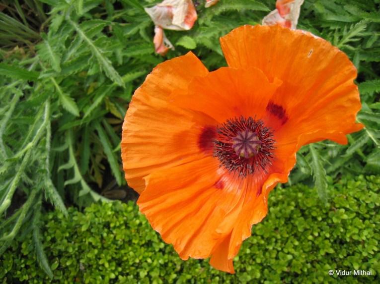 Photograph of an orange flower