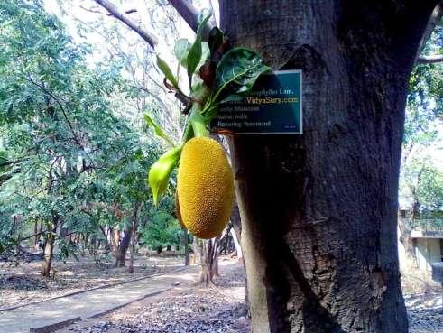 Digital vacation jackfruit