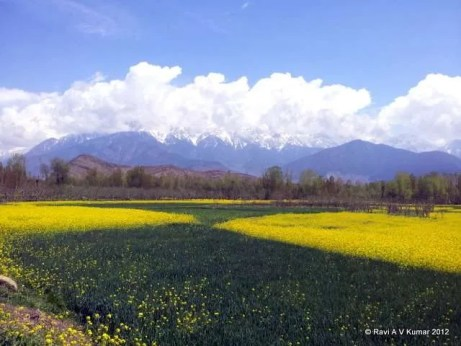 another day in paradise srinagar
