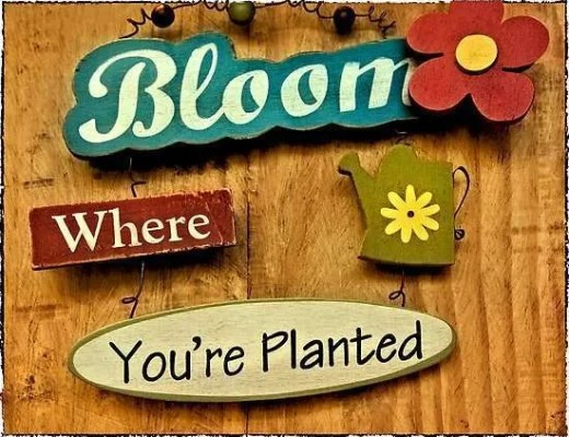 bloom where you are planted vidya sury