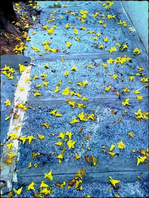 vidya sury change footpath 2