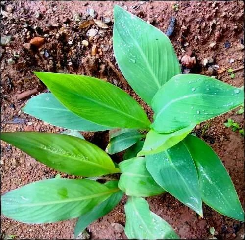 vidya sury change leaves
