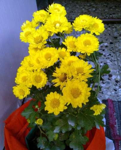 vidya sury flowers 2