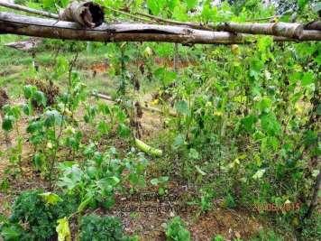 art of living farming