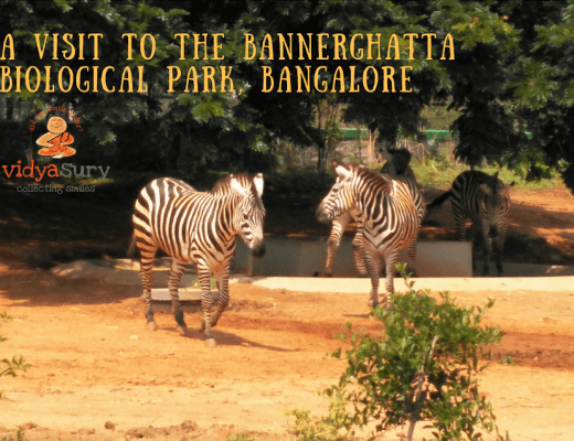 A visit to the Bannerghatta Biological Park Vidya Sury