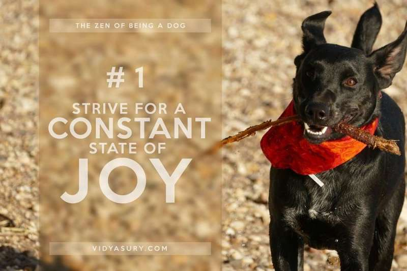 Lesson 1 The Zen of being more dog--It's about the dog. The dog book blog tour #Zen #dogs
