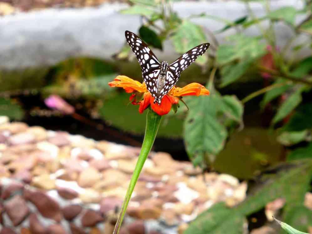 Ferme aux papillons Sud du Cambodge