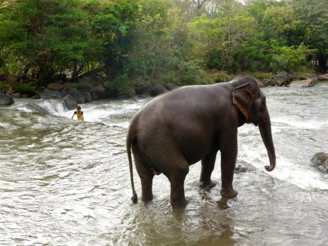 Sud du Laos Tad Lo Elephant Shower