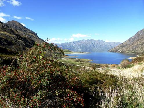 l'île du Sud-Lake Hawea (2)