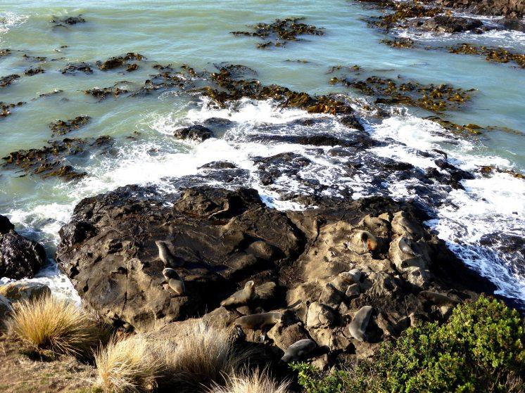 l'île du Sud-Moeraki (7)