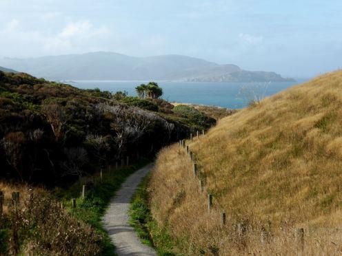 l'île du Sud-The Catlins (3)